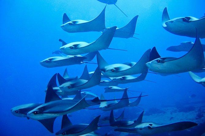 Immersione in Corridoio 2-Tank per subacquei certificati a Cabo San Lucas