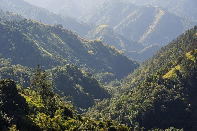 Jamaica Blue Mountain Guided Nature Tour