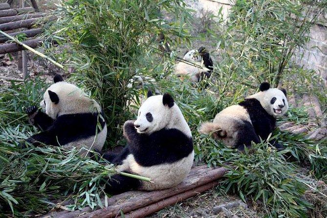 Excursão de 9 dias para grupos pequenos em Pequim, Xi'an, Chengdu, sem compras
