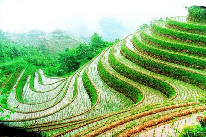 1-Day Longsheng Rice Terrace Tour from Guilin with Private Guide & Driver