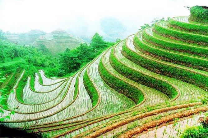 Excursão de 1 dia para o arroz com arroz Longsheng saindo de Guilin com guia particular e motorista