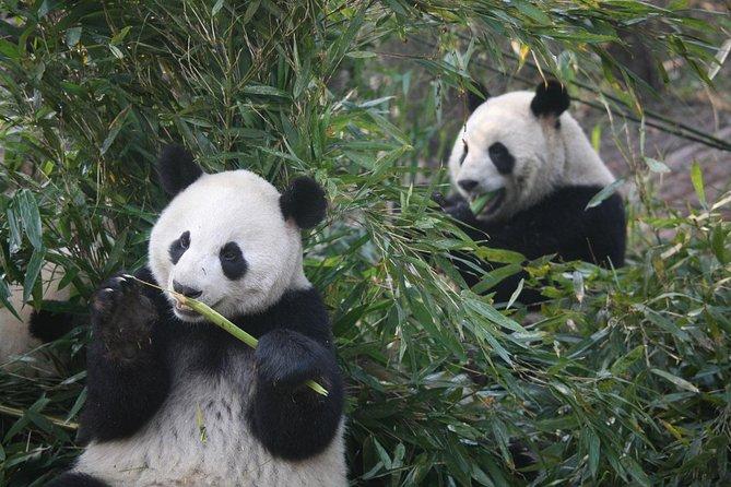 11-Day China Tour of Small Group to Beijing, Xian, Chengdu, Shanghai, No Shops