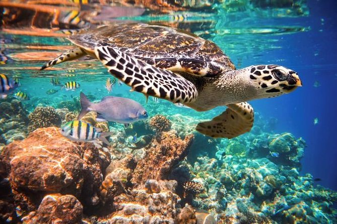 Tulum Turtles Swim and Snokel Tour from Cancun