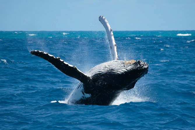 Whale Watching Day tour in Contadora - All included
