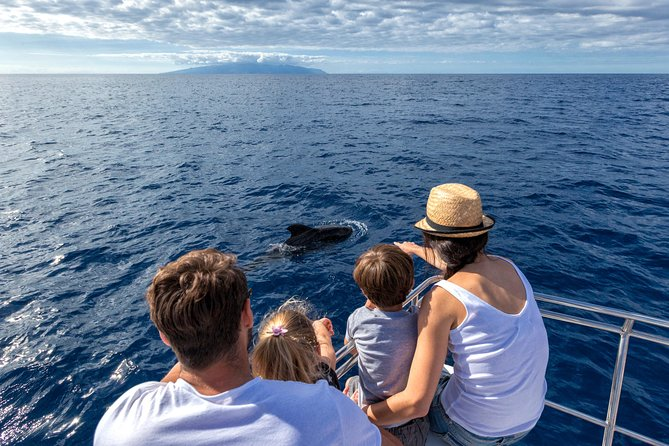Whales & Dolphins watching in exclusive sailboat