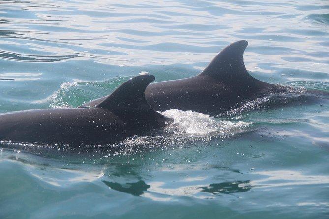 Golfito Dolphin Tour