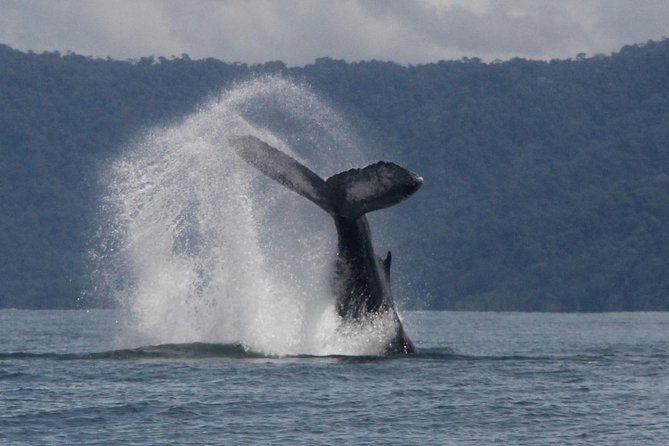 Humpback Whale Watching Tour