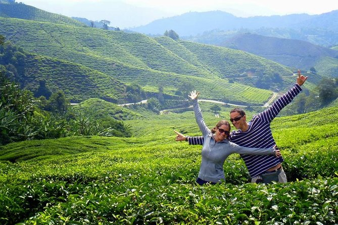 Private Cameron Highlands Full-Day Tour Enroute Batu Caves from Kuala Lumpur