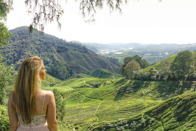 Private Full Day Tour : Cameron Highlands with Batu Caves Stopover
