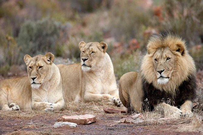 Best Of Aquila Safari Full Day Tour from Cape Town