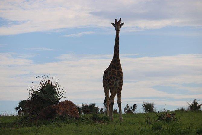 3 Days 2 Nights Murchison Falls National Park Safari