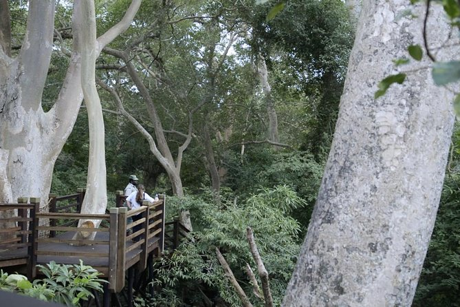 Fig Forest Walk