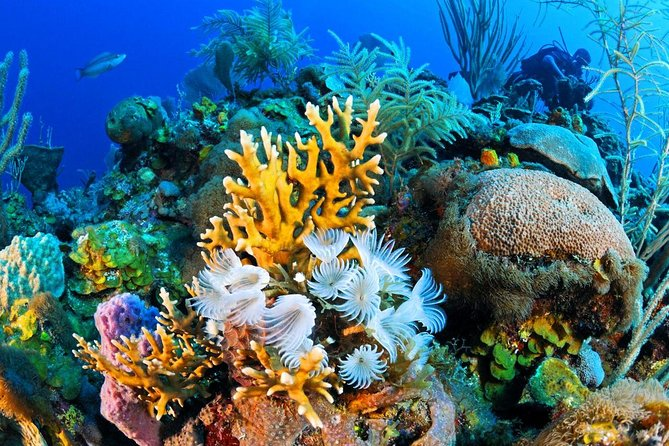 Ras Mohammed National Park: Snorkeling and Boat Tour from Sharm El Sheik