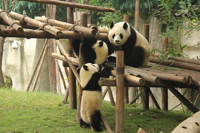 Tour di Chengdu per piccoli gruppi: Base gigante dei panda, Jinli Street, Kuanzhai Xiangzi
