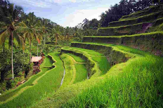 WONDERFUL TANAH LOT AND RICE TERRACE WITH TRIDATU BALI TOURS