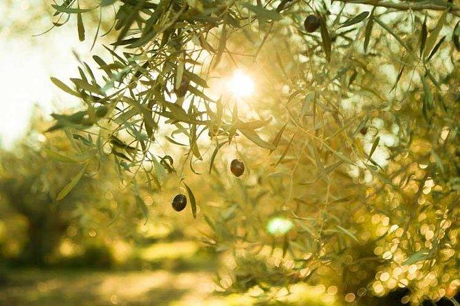 Olive Oil Tour close to Nafplio