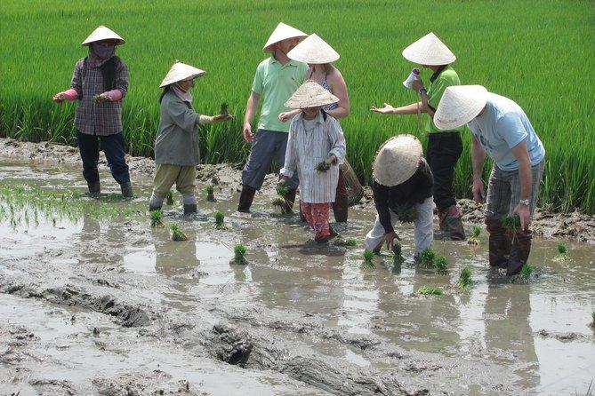 Recorrido agrícola en Hoi An