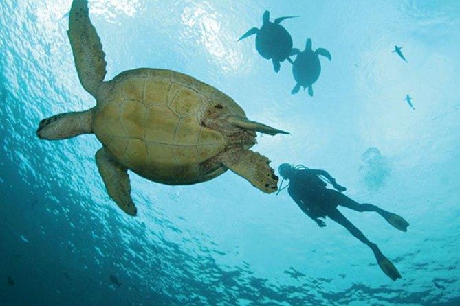パナマからの証明ダイバーのための1日の2つの海