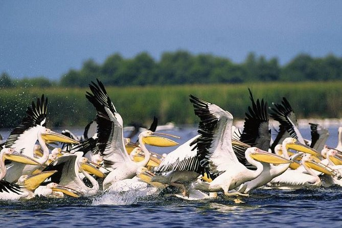 Danube Delta Private Day Tour from Bucharest