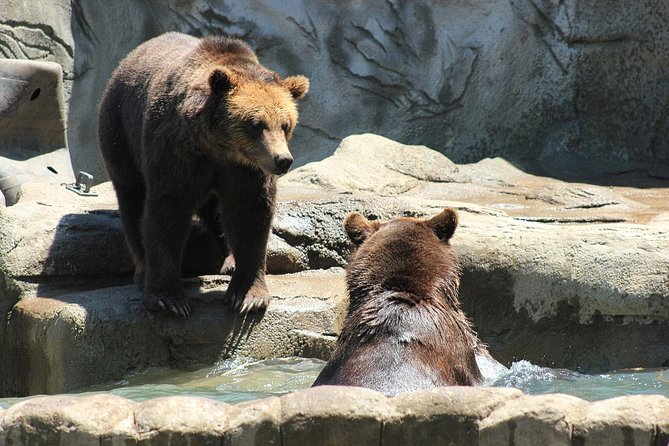 LiBEARty Brown Bear Sanctuary and the most important castles from Romania