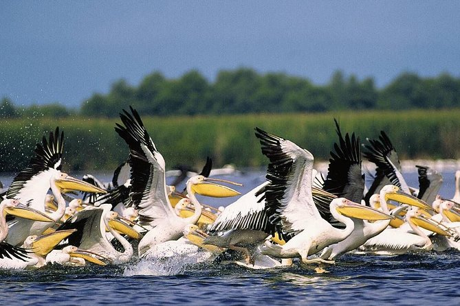 2-Day Small-Group Tour in the Wild Danube Delta