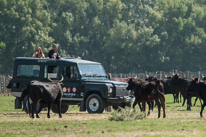 3 Hour Camargue 4x4 Safari from Le Grau-du Roi