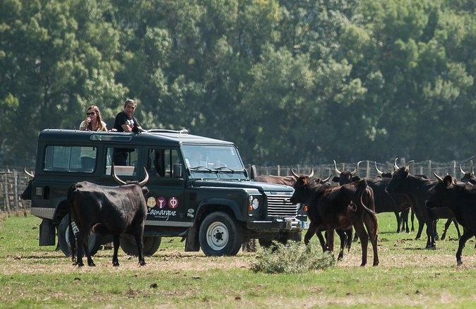 4x4 safari in the Camargue from Aigues Mortes (Half day trip)