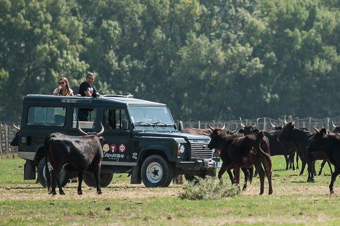 Camargue VIP 4x4 Safari from ARLES