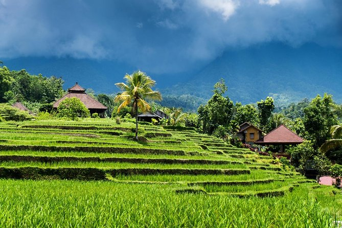 Ubud Ricefield Trekking Tour (with Coffee Break)