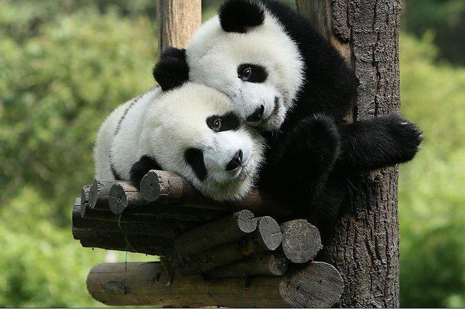 Visite privée d'une journée de Panda à Chengdu