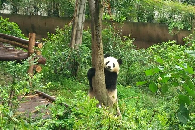 Customizeable Chengdu Private Tour of Panda Base and City Sightseeing