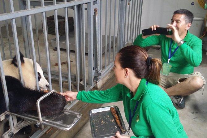 Dujiangyan Panda frivillig opplevelse med lunsj