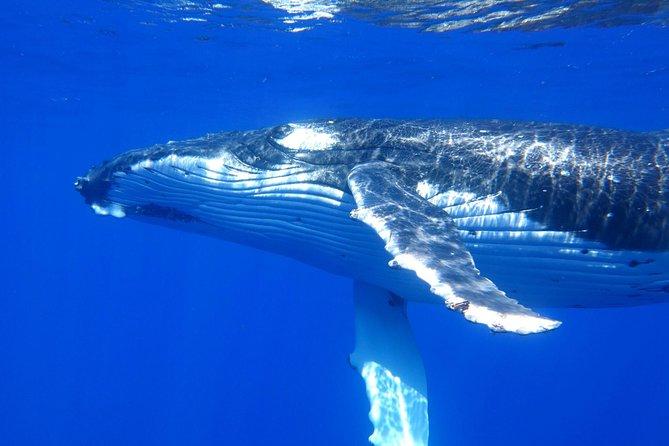 Whale Shark Swim by Catamaran in Shoulder Season