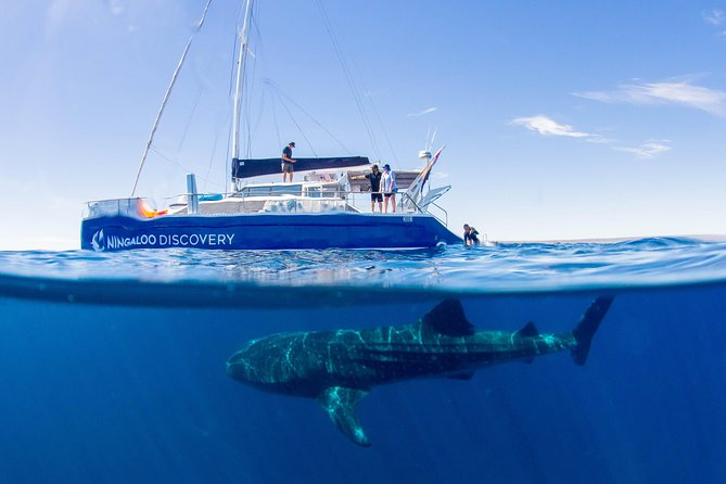 Ningaloo Whale Shark Swim on a Luxury Sailing Catamaran