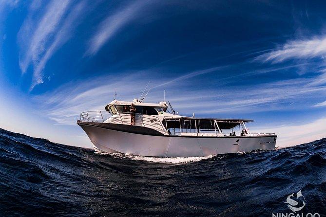 Ningaloo Whale Shark Swim on a Powerboat 2019 - Free