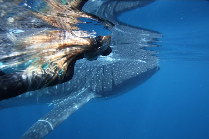Ningaloo Whale Shark Swim on a Powerboat