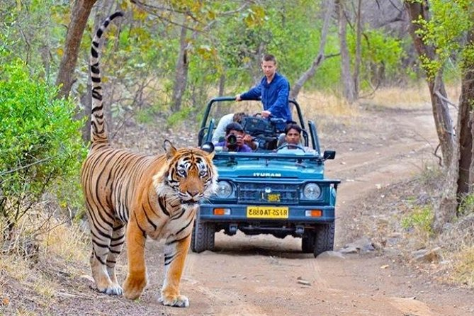 Private Transfer From Jaipur To Ranthambore