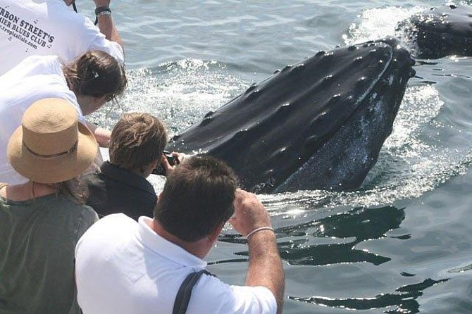 Don't forget your camera for amazing up-close photos of the whales!