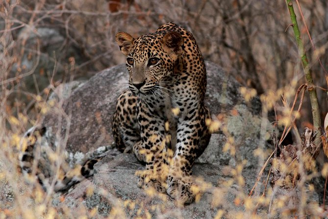 Yala National Park Safari Experience from Galle including Lunch at a Campsite