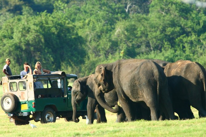 Minneriya National Park Private Jeep Safari from Habarana