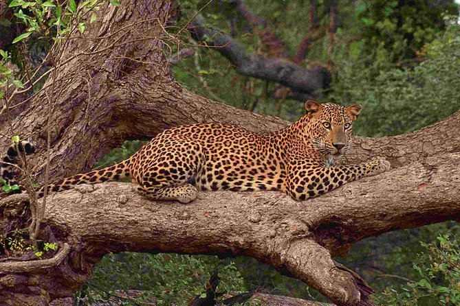 Private Full day Leopard Safari with Picnic Lunch at Yala National Park