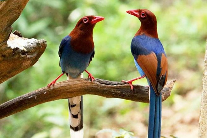 Bird Watching and Cycling expedition in Kitulgala