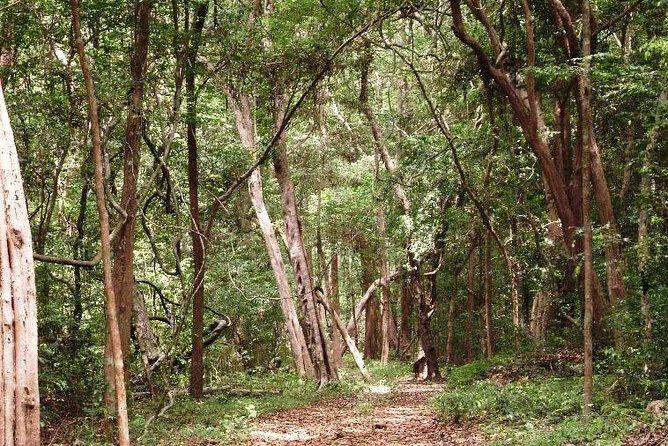 Visite à pied de l'Arboretum de la demi-journée à Kottawa
