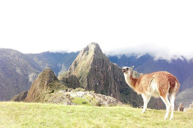 Small-Group Day Tour to Machu Picchu