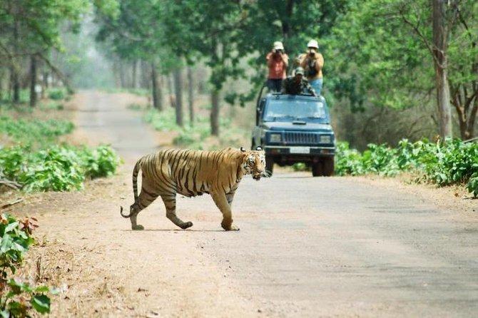 Royal Bengal Tiger in Chitwan