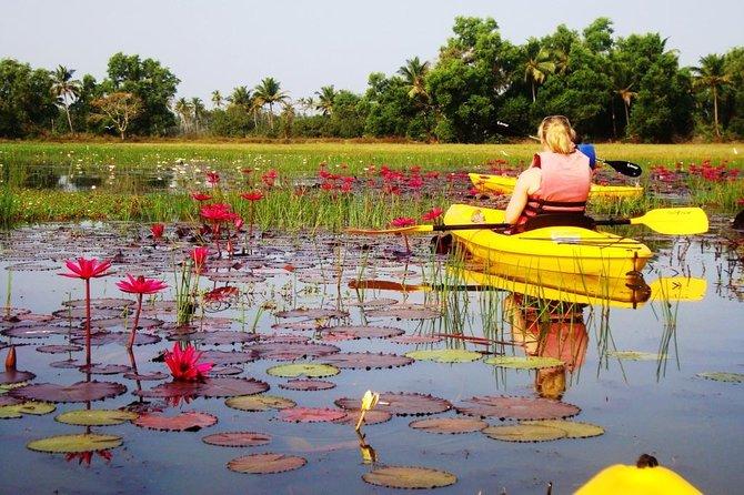 Goa Kayaking Excursion of Sal Backwaters