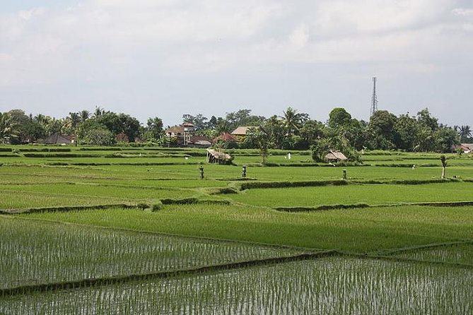 Private Village Lifestyle and Traditional Farming Tour in Ubud
