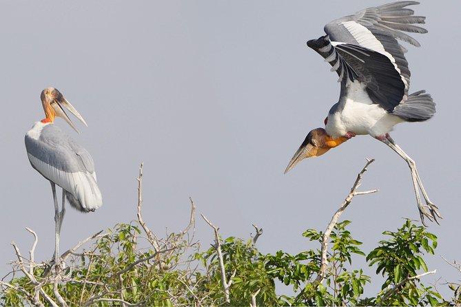 Full Day Tonle Sap Lake Tour with Prek Toal Bird Sanctuary