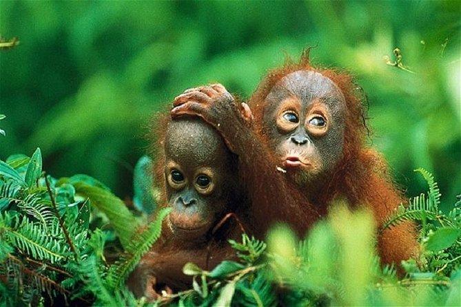 Private Tour: Gunung Leuser National Park Trekking Tour with Orangutan Viewing from Medan