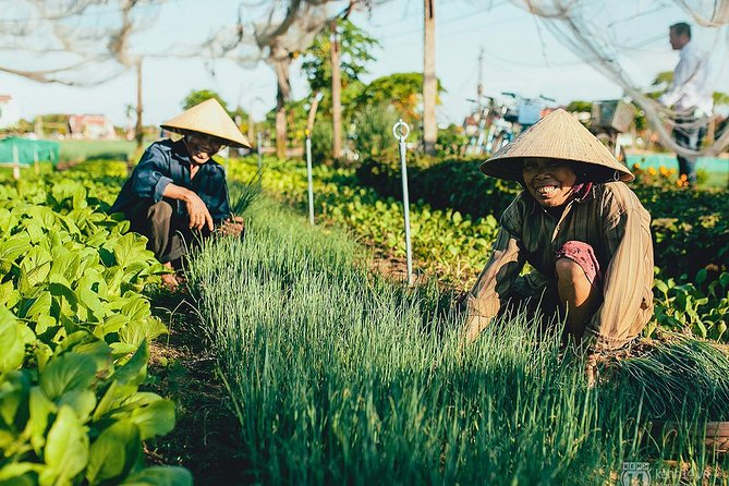Hoi An Fish & Rice full day tour - Visit Tra Que Vegetable village & Cam Thanh